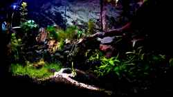 Aquarium Wald Lichtung