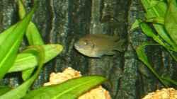 Besatz im Aquarium Becken 43