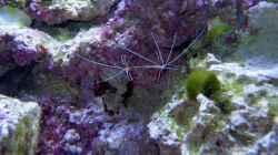 Aquarium Becken 4394