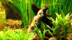 Dekoration im Aquarium Becken 4396