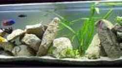Aquarium Becken 44