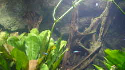 Dekoration im Aquarium Becken 4412