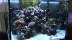 Aquarium Becken 4431