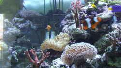 Technik im Aquarium Becken 4431