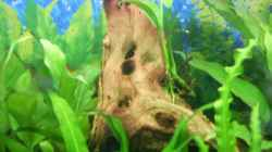 Dekoration im Aquarium Becken 4453