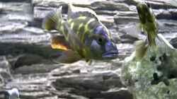 Besatz im Aquarium Becken 45