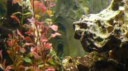 Dekoration im Aquarium Becken 4603