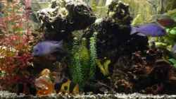 Besatz im Aquarium Becken 4603