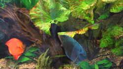 Pflanzen im Aquarium Becken 4614