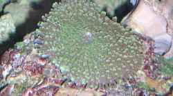 Pflanzen im Aquarium Becken 4655