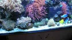 Besatz im Aquarium Becken 4655