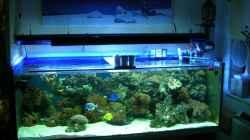 Aquarium Becken 4655