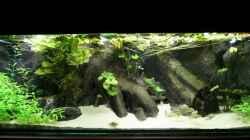 Aquarium Becken 4833