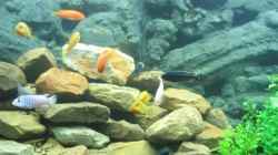 Dekoration im Aquarium Becken 484