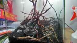 Aquarium GreenWave