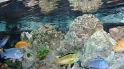 Dekoration im Aquarium Becken 4916