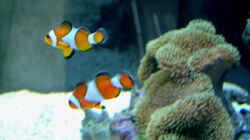 Besatz im Aquarium Becken 4934
