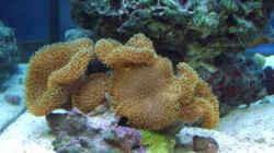 Aquarium Becken 4934