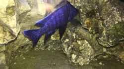 Aquarium Becken 5002