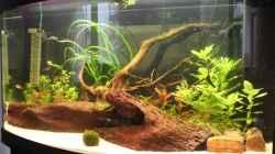 Aquarium 1 Woche nach dem Einrichten