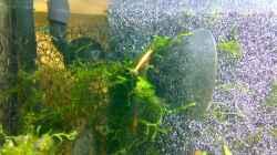 Pflanzen im Aquarium Becken 5103