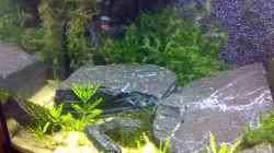 Dekoration im Aquarium Becken 5103