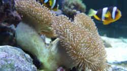 Besatz im Aquarium Becken 5109