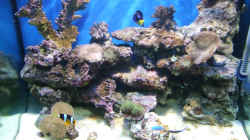 Aquarium Becken 5109