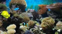 Dekoration im Aquarium Becken 5109