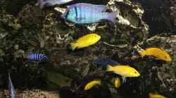 Besatz im Aquarium Becken 5401