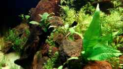 Dekoration im Aquarium Becken 5689