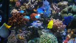Aquarium Becken 5845