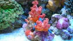 Pflanzen im Aquarium Becken 5845
