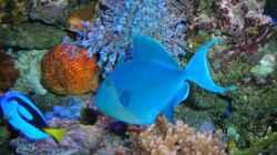 Besatz im Aquarium Becken 5845