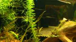 Dekoration im Aquarium 160L