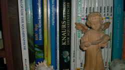 Meine Aquarienbücher