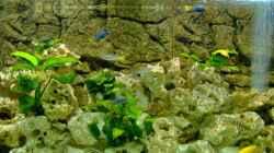 Besatz im Aquarium Becken 5959