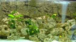 Aquarium Becken 5959