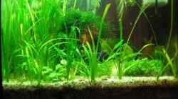 Aquarium Becken 6196