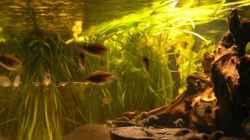 Dekoration im Aquarium Becken 6291