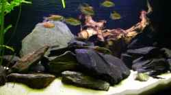 Besatz im Aquarium Becken 6291