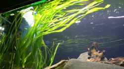 Pflanzen im Aquarium Becken 6291