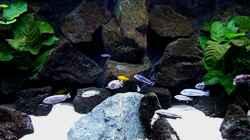 Aquarium Bilskirnir