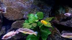 Dekoration im Aquarium Bilskirnir