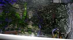 Technik im Aquarium Bilskirnir