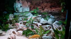 Dekoration im Aquarium Becken 643