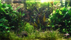 Dekoration im Aquarium Becken 6437