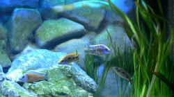 Dekoration im Aquarium Becken 6488