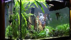 Aquarium Becken 656
