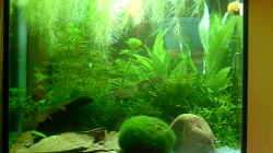 Dekoration im Aquarium Becken 6591